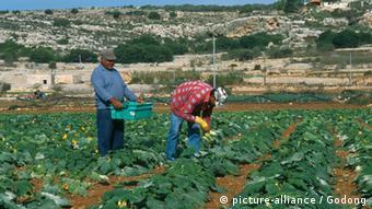 Maltesische Bauern auf ihrem Feld (Foto: picture-alliance)