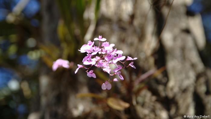Bildergalerie Blumen und Pflanzen von Inhotim