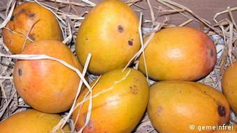 Alphonso Mangos