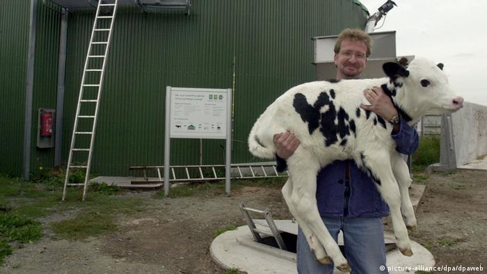 Por cada vaca que produce gas metano debe haber tres árboles que lo absorban, propone el paquete legislativo verde europeo.