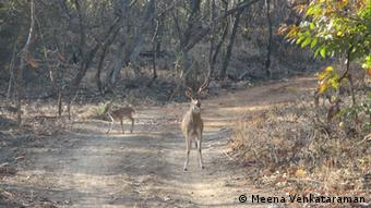 Animals in the Gir National Park in India (Photo: Meena Venkataraman)