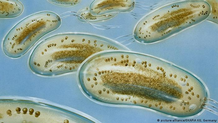 Illustration Krankheitserreger Bakterien Escherichia coli