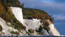 Die Kreide-Steilküste der Insel Rügen im Nationalpark Jasmund zwischen Sassnitz und dem Königsstuhl, aufgenommen am 19.10.2005. Das Nationalparkamt reagierte seit den Küstenabbrüchen auf der Insel im Frühjahr 2005 mit Hinweisschildern und Handzetteln, um die Besucher vor den Gefahren an den Steilufern zu warnen. Im Winter und Frühjahr sollte deshalb das Wandern an den Steilufern unterlassen werden. Auf der Ostseeinsel Rügen gibt es über 140 Kilometer Steilküste. Foto: Stefan Sauer +++(c) dpa - Report+++