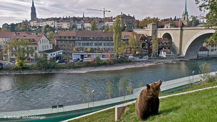 Bärenpark in Bern Eröffnung Gelände Bär
