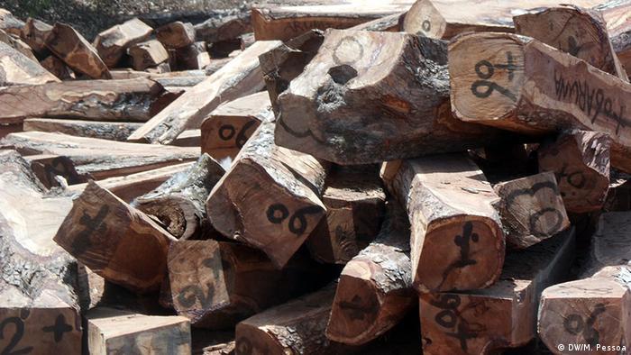 Holzschmuggel Guinea-Bissau