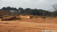 Waldrodung Holzlager Guinea-Bissau