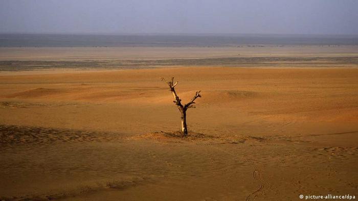 Toter Baum in der offenen Wüste (Foto: dpa)
