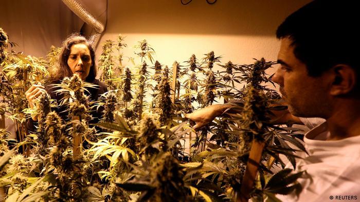 Uruguay Marihuana Legalisierung