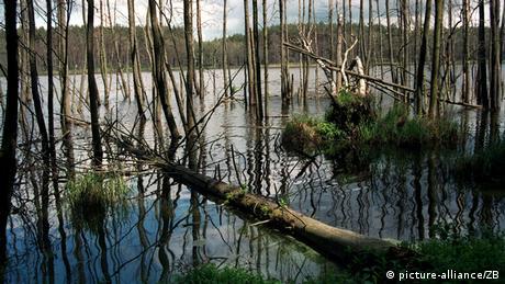 Bäume stehen im Wasser