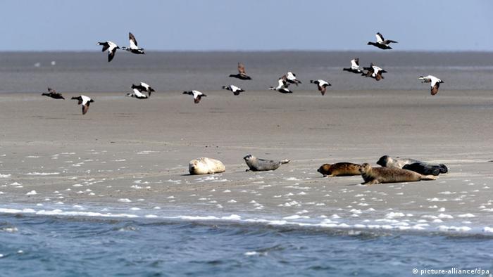 Taman Nasional Laut Wadden
