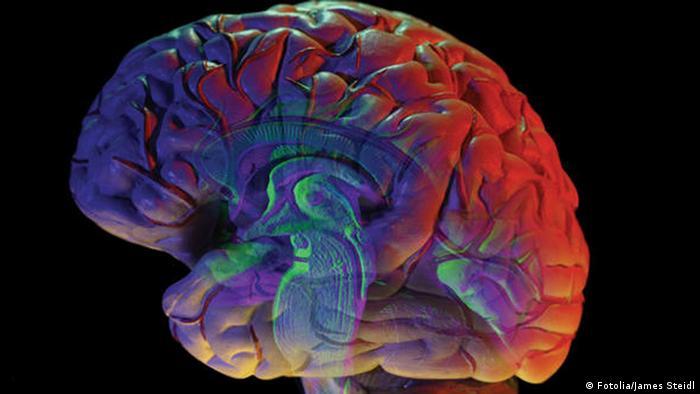 Gehirn Foto: James Steidl - Fotolia.com