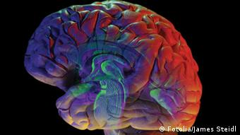Gehirngrafik