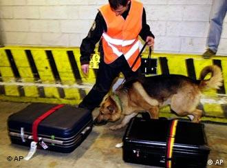 A German shepherd checking suitcases for explosive materials at an airport