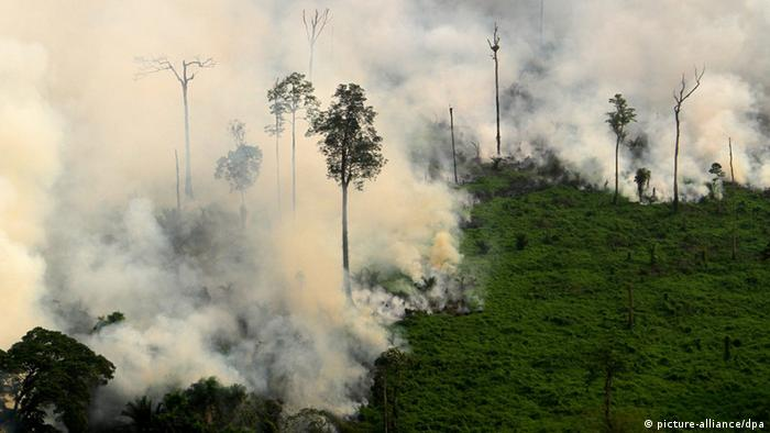 Burning trees and peat in Sumatra, 2014 (Photo: picture-alliance/dpa)