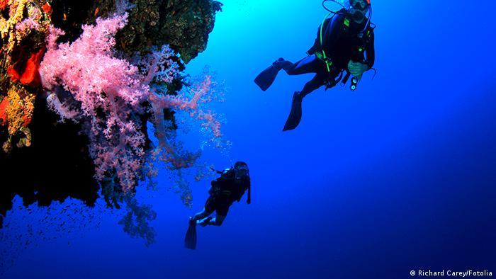 Divers at a coral reef