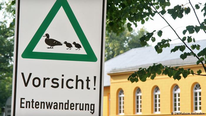 Осторожно, гуляющие утки!