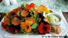 Salat Essbare Blüten