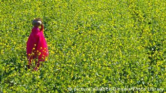 Lady walking along fields of yellow mustard flowers