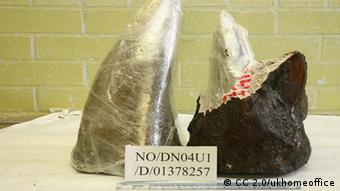 Horn vom Nashorn