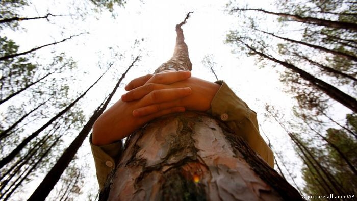 Обнімати дерева?