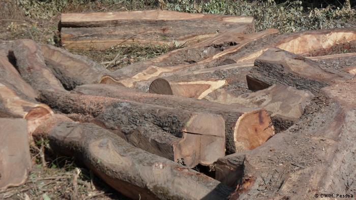 Abholzung des Waldes Guinea-Bissau