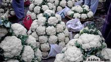 Organic cauliflower Shclagworte: Bangladesh, organic, food, fertiliser, Copyright: Abdus Salam The photos were sent by Mr Muhammed Abdus Salam, president of Bangladesh Organic Products Manufacturers Association (BOPMA).