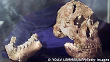 Südafrika Urmenschen Hominide Australopithecine Schädel