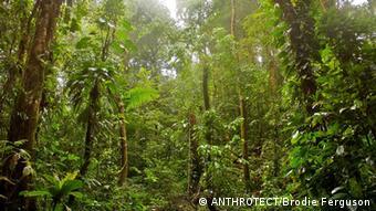 Tropical rainforest, Choco-Darien region, Colombia