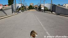 epa04264267 (FILE) A file photo dated 03 October 2011 of a stray dog dozing right in the middle of the street leading to the main bridge of the ethnically divided town of Mitrovica, Kosovo. Ethnic Serbs in Kosovo on 18 June reportedly dismantled a barricade in the hotspot town of Mitrovica that had been standing for three years, taking another step toward integrating their enclave with Kosovo institutions. The removal of the obstacle on a bridge that had separated the town's Serbian north from its Albanian south followed 08 June parliamentary polls, the first not boycotted by the region's Serbs. EPA/VALDRIN XHEMAJ *** Local Caption *** 50063991 +++(c) dpa - Bildfunk+++