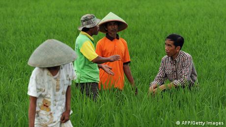 Indonesien Präsidentschaftswahlen Joko Widodo Reisfeld