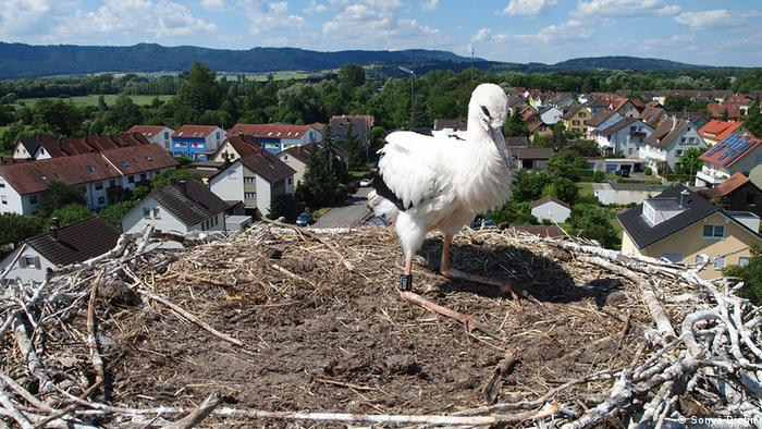 A stork nest on a church Tower (Photo: Sonya Diehn)