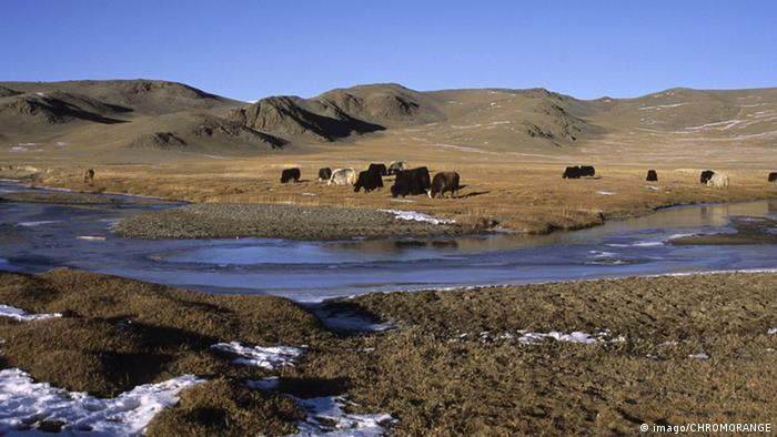 Mongolei Taiga Altai-Gebirge