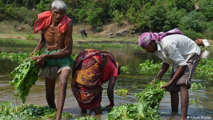 India's uranium mines expose villages to radiation: DW Report