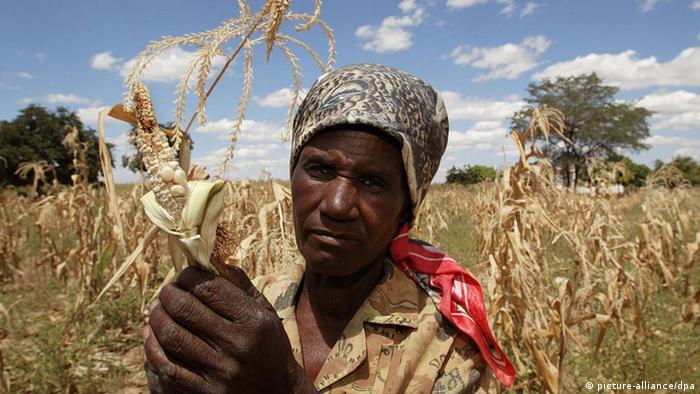 Gentechnik soll Hunger stillen Bauer bei der Arbeit in Afrika (Foto: dpa)