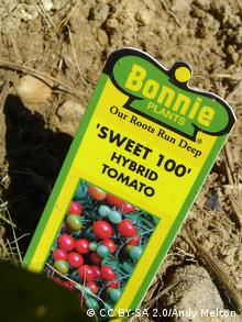 Foto: Schild mit Hinweisen zur Hybrid-Tomate (Foto: CC BY SA 2.0: Andy Melton| Quelle: https://www.flickr.com/photos/trekkyandy/488932030/ Lizenz: https://creativecommons.org/licenses/by-sa/2.0/deed.de)