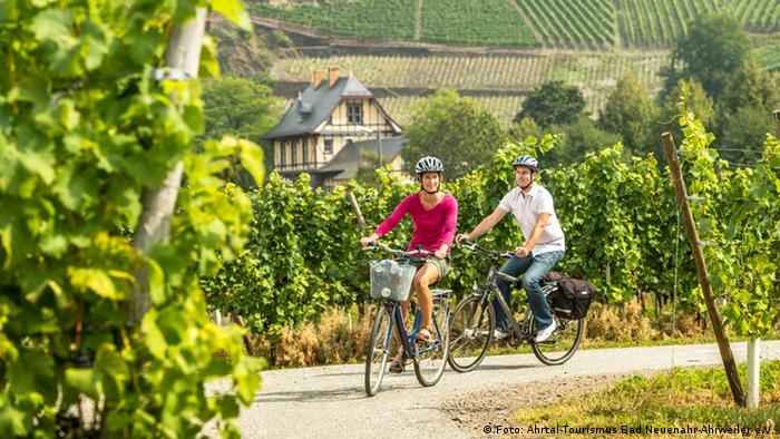 Two cyclists amid vineyards in the Ahr valley