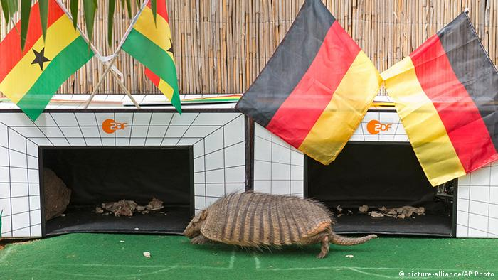 An Armadillo walks past Ghana Germany flags. (picture-alliance/AP Photo)