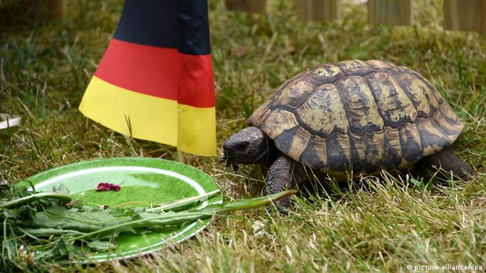 WM Orakel Tiere Schildkröte Momario
