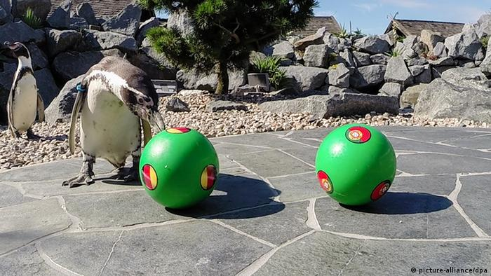 WM Orakel Tiere Pinguin Ronald