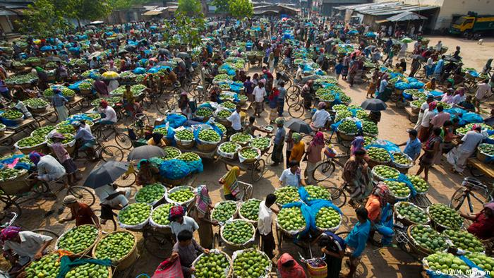Bildergalerie Mangos in Bangladesch (DW/M. Mamun)
