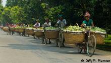 Bildergalerie Mangos in Bangladesch