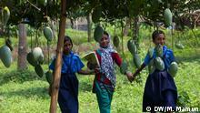 Mangos of Chapainwabganj district are famous for high quality tasty varieties. This popular summer fruit is abuzz with activities as buyers from different areas of the country are thronging there during the ongoing peak harvest season. Keywords: Asia, South Asia, Bangladesh, Rajshahi, Chapainwabganj, Shibganj, Kanshat, Shahbajpur, Agriculture, Rural, Village, People, Man, Third World, Developing Country, Farmer, Harvest, Harvesting, Mango, Fruit, Fruits, Seasonal Fruit, Market, Trade, Traders, was taken: June 16, 2014 DW Korrespondent Mustafiz Mamun aus Dhaka, Bangladesh