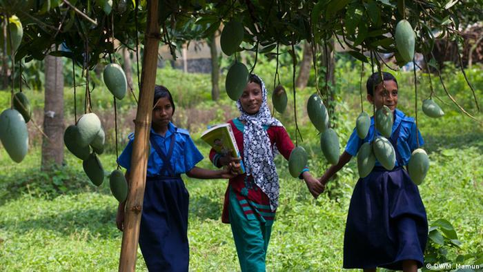 Манго зазвичай ростуть у тропіках, але це може змінитися