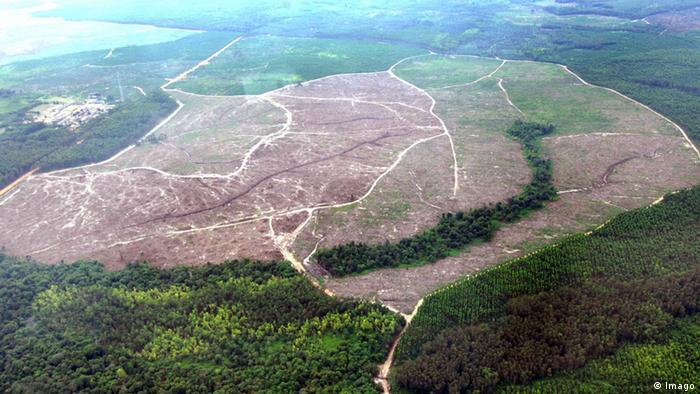 Área desmatada na Indonésia para plantação de palmeiras