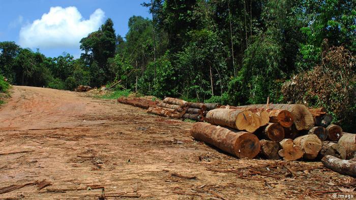 Photo Reporting: Logging