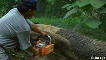 Indonesien Borneo Rodung Regenwald Abholzung Waldarbeiter