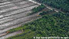 This photograph taken on February 24, 2014 during an aerial survey mission by Greenpeace at East Kotawaringin district in Central Kalimantan province on Indonesia's Borneo island, shows the clearing of trees on a peatland forest located in the concession of PT. Globalindo Alam Perkasa which is being developed for a palm oil plantation. Environmental group Greenpeace on February 26 accused US consumer goods giant Procter & Gamble of responsibility for the destruction of Indonesian rainforests and the habitat of endangered orangutans and tigers. AFP PHOTO / Bay ISMOYO (Photo credit should read BAY ISMOYO/AFP/Getty Images)