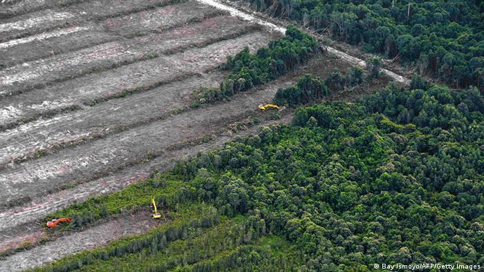 Indonesien Borneo Rodung Regenwald Abholzung Holz