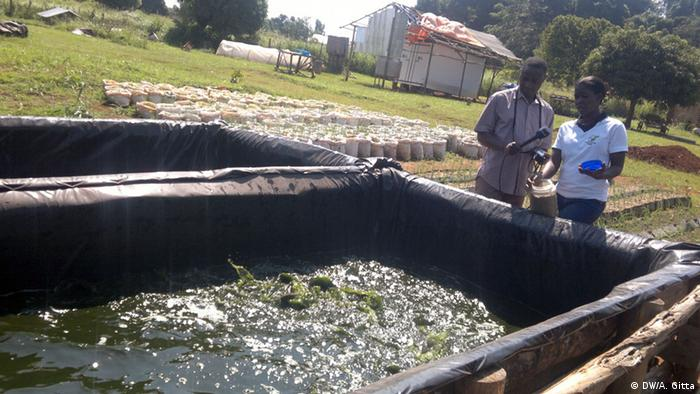 Emma Naluyima and a DW reporter standing at the side of a raised fishpond