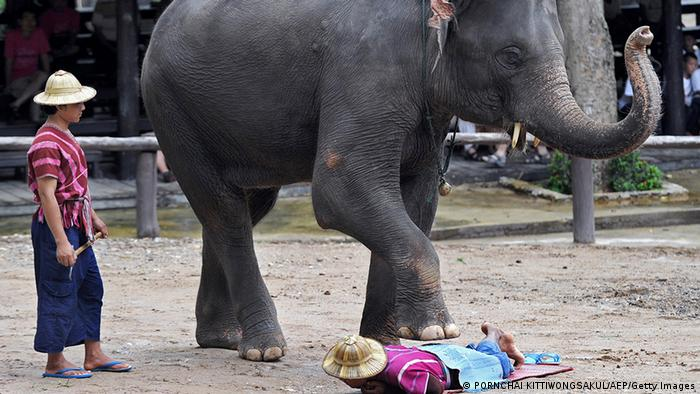 Bildergalerie Massage in Thailand Elefant (PORNCHAI KITTIWONGSAKUL/AFP/Getty Images)